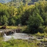 Parco dei Nebrodi